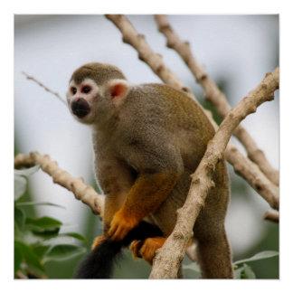 Monkey_2014_1201 Poster