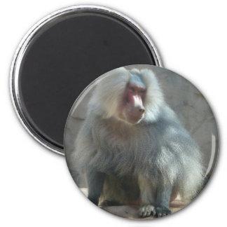 Monkey 2 Inch Round Magnet