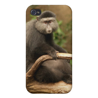 Monkey 4  case for iPhone 4