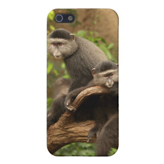 Monkey 4  cover for iPhone SE/5/5s