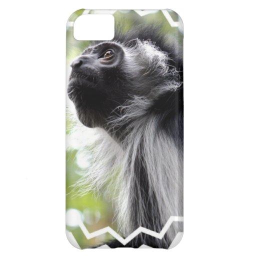 monkey-53