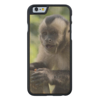 monkey-92 carved® maple iPhone 6 case