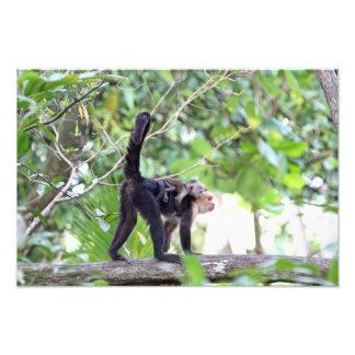 Monkey and Baby Photo Print
