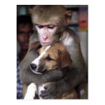 monkey and dog post card