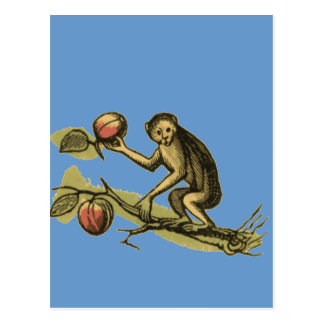 Monkey and His Coconuts Postcard