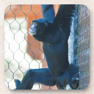 monkey at the zoo coaster