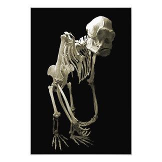 Monkey Body Bones Photographic Print