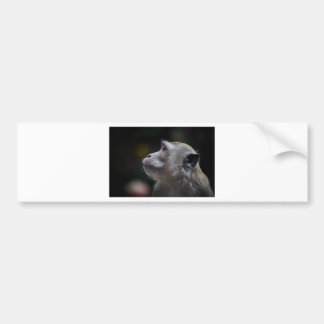 Monkey Bumper Sticker