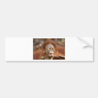 Monkey business 2 bumper stickers