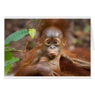 Monkey business 3 card
