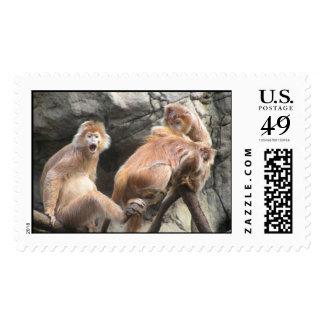 Monkey Business Postage