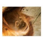 Monkey Business - Super Cute Edition Postcard