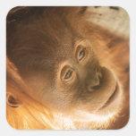 Monkey Business - Super Cute Edition Square Sticker