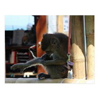 Monkey catching fleas postcard