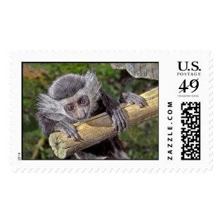 Monkey Colobus Monkey Baby Postage