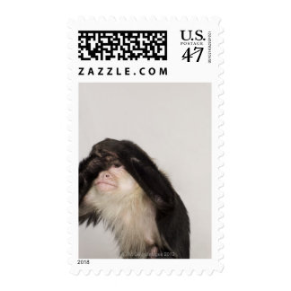 Monkey covering its eyes postage