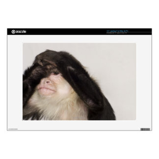 Monkey covering its eyes skin for laptop