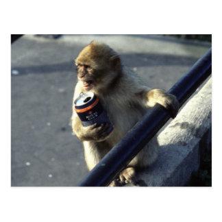 Monkey Drinking Postcard