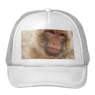 Monkey Face Baseball Hat