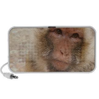 Monkey Face Speakers