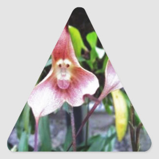 MONKEY Flower: Nature Miracles Wonders Triangle Sticker