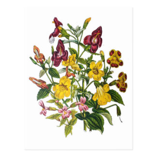 Monkey-flowers Postcard