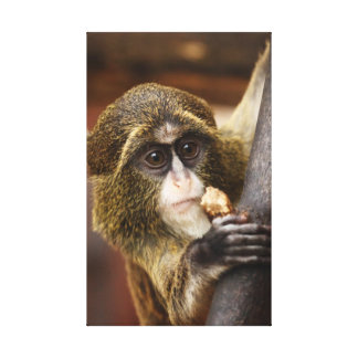 Monkey in a tree stretched canvas print