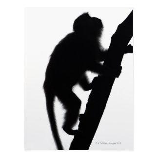 Monkey in a tree, Railay peninsula, Postcard