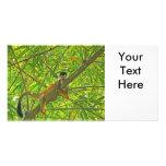 Monkey in Bamboo Jungle Custom Photo Card