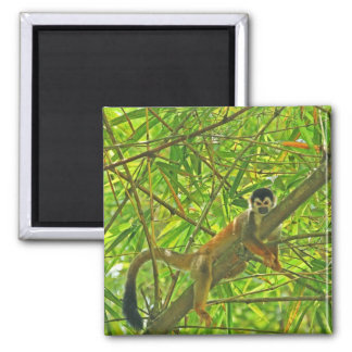 Monkey in Bamboo Jungle Magnet