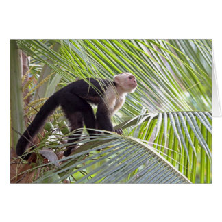 Monkey in Bamboo Jungle Photo Greeting Card
