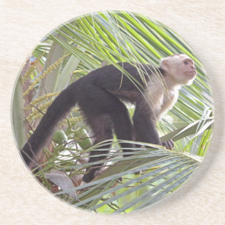 Monkey in Bamboo Jungle Photo Drink Coaster