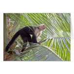 Monkey in Bamboo Jungle Photo Greeting Card