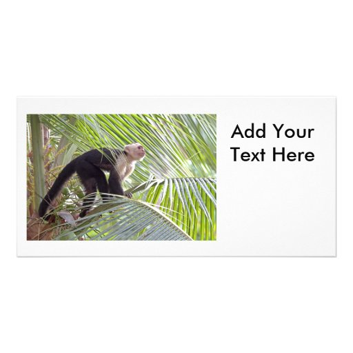Monkey in Bamboo Jungle Photo Picture Card