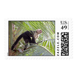Monkey in Bamboo Jungle Photo Stamp
