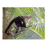 Monkey in Bamboo Jungle Photo Postcard
