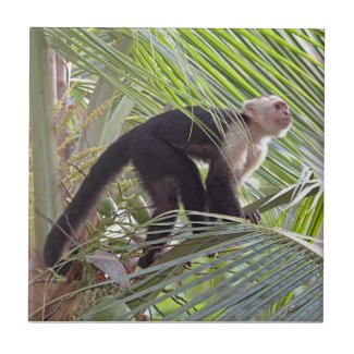 Monkey in Bamboo Jungle Photo Tiles