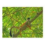 Monkey in Bamboo Jungle Postcard