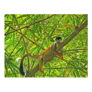 Monkey in Bamboo Jungle Postcard