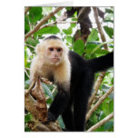Monkey in Costa Rica Stationery Note Card