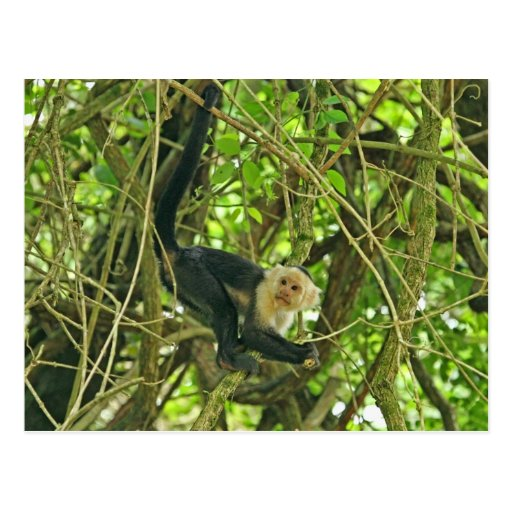 Monkey in Forest Photo Postcard