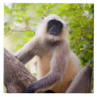 Monkey in jungle of Ranthambore National Park Ceramic Tile