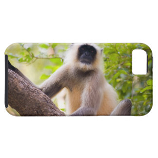Monkey in jungle of Ranthambore National Park iPhone SE/5/5s Case