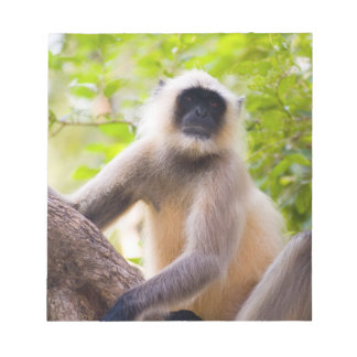 Monkey in jungle of Ranthambore National Park Memo Notepads