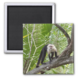Monkey in the Jungle 2 Inch Square Magnet