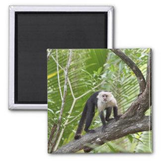 Monkey in the Jungle Fridge Magnet
