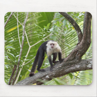 Monkey in the Jungle Mouse Pad
