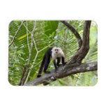 Monkey in the Jungle Rectangular Photo Magnet
