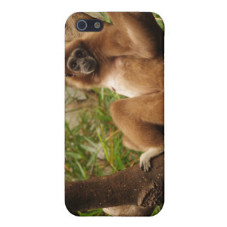 Monkey iPhone 4 Speck Case For iPhone SE/5/5s