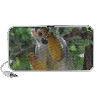 monkey.jpg tímido altavoces de viajar